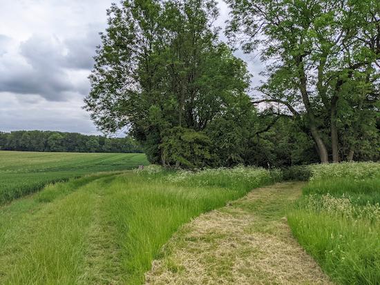 Barley footpath 13 approaching Trigg's Grove