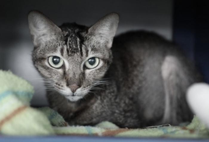 Kucing Peliharaan di Sheung Wan Positif Tertular covid-19