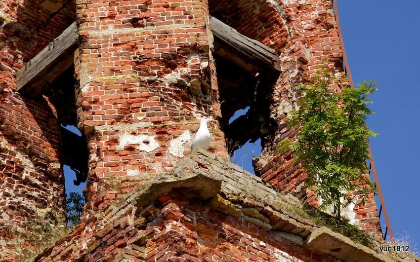 Чайка на руинах часовни
