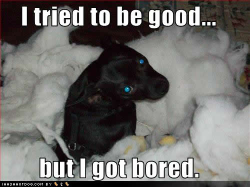 Funny Image Collection: Dog quotes | Quotes about dogs ...