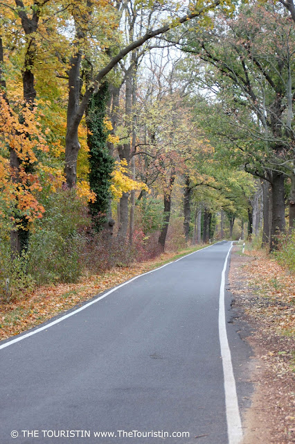 Narrow country lane lined by trees; autumn foliage