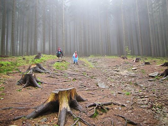 Przecinamy niedużą polanę powstałą w wyniki zrzynki drzew.