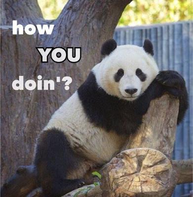 Funny Panda is in full mood.