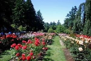 kebun-bunga-sidomulyo-malang