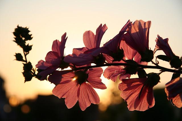 soleil printemps jour fleurs couleurs lumière