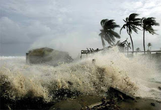 filosofi pohon kelapa diterjng badai dasyat
