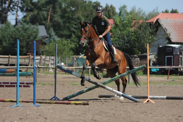 W jaki sposób samodzielnie trenować konia?