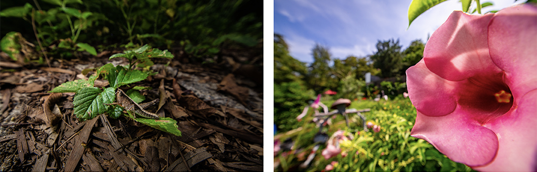 Фотографии растений, сделанные с очень близкого расстояния