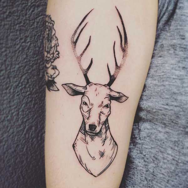deer tattoo sketch