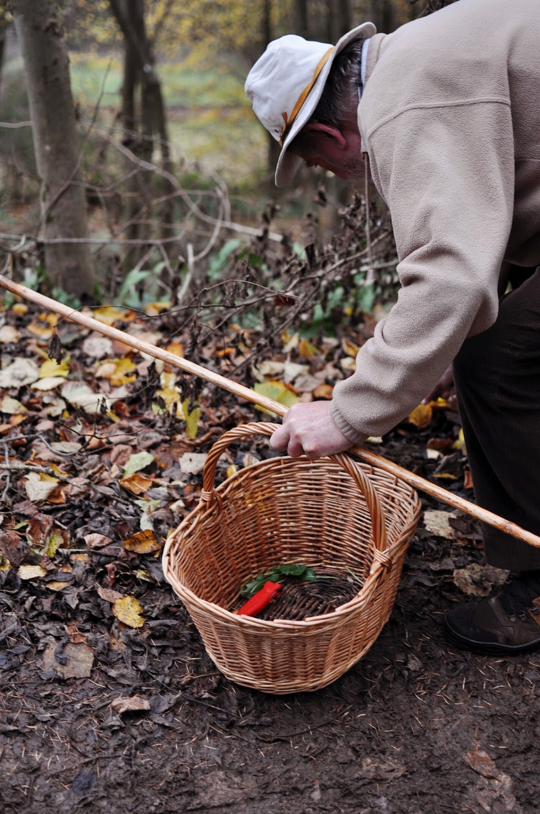 foraging, foraged foods, edible wild plants, wild foods, wild mushrooms, wild edibles, tudor farmhouse hotel, forest of dean, hotel stays in Southwest, southwest hotels, farm retreat