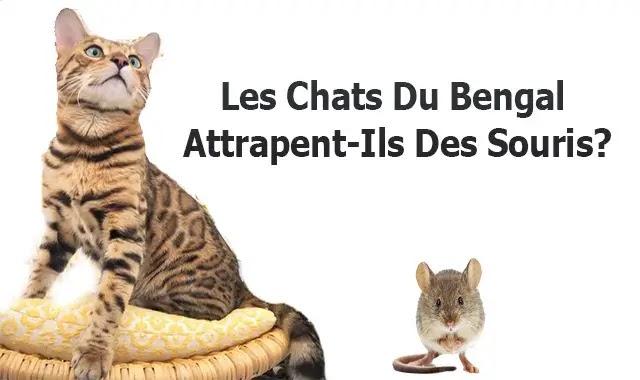 Les Chats Du Bengal Attrapent-Ils Des Souris?