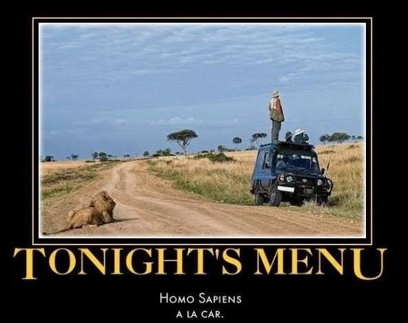 Funny Lion Safari Tonights Menu Photo