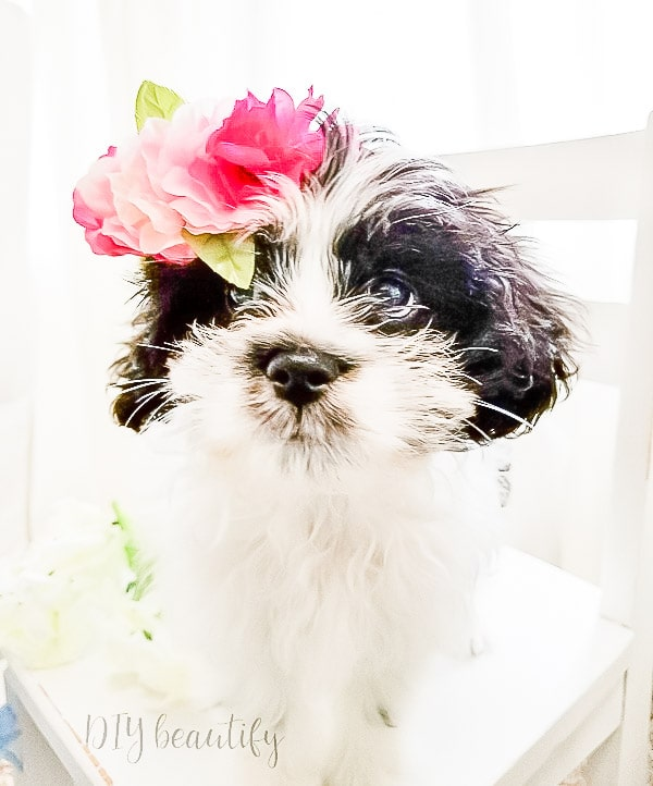 puppy wearing DIY flower crown