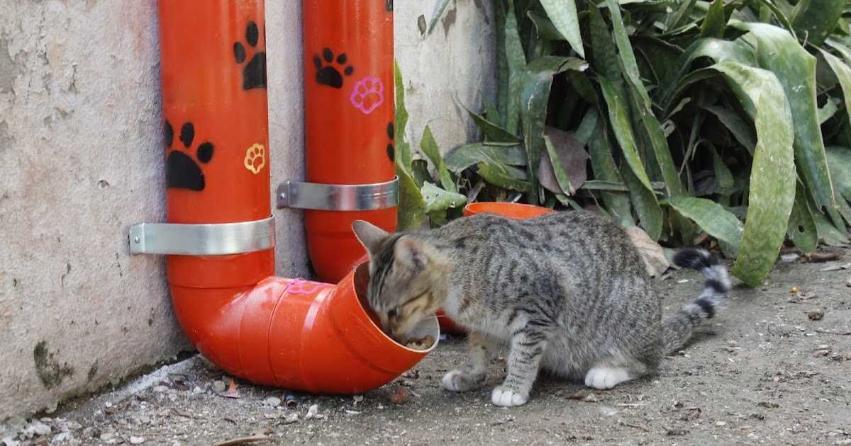 Instalan estaciones de alimentos para perros y gatos en situación de calle  - Libertad de Expresión Yucatán (LEY)