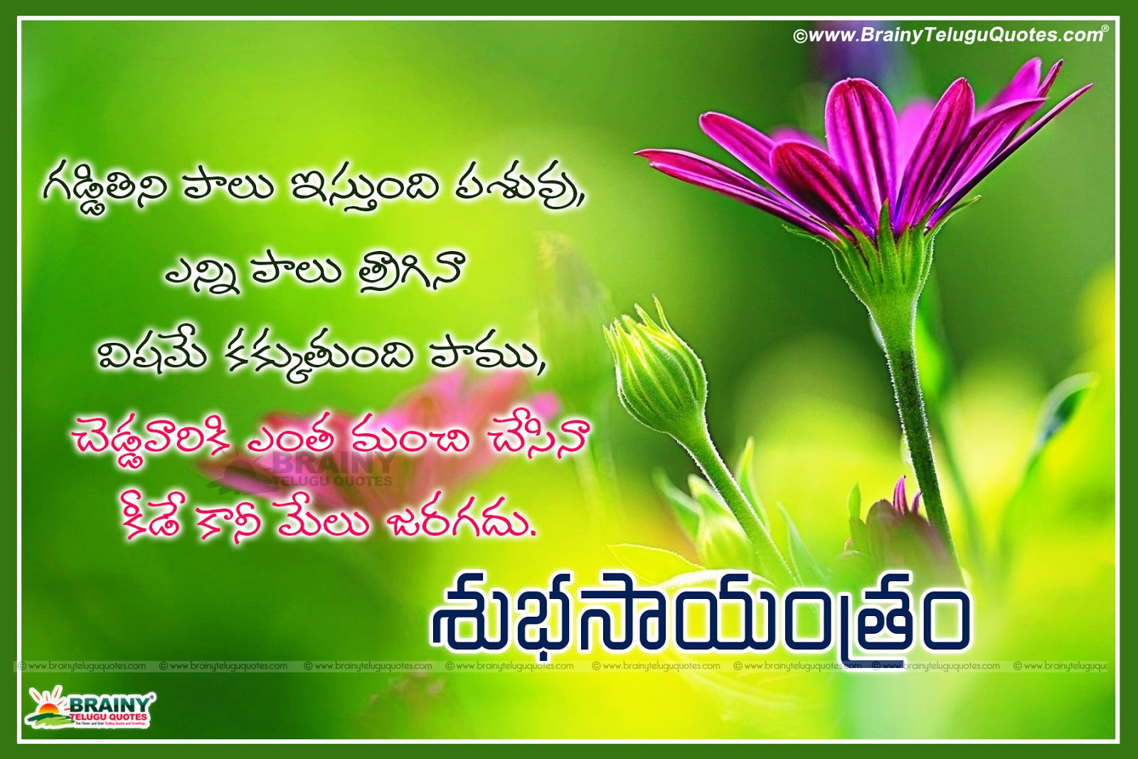 Best Good Evening Quotes In Telugu Brainyteluguquotescomtelugu