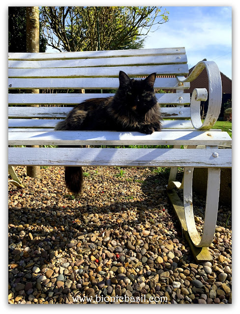 Pandora Sunning on The Bench ©BionicBasil® The Pet Parade 345