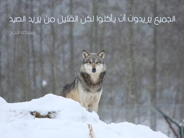 حكم عن الحياة مترجمة