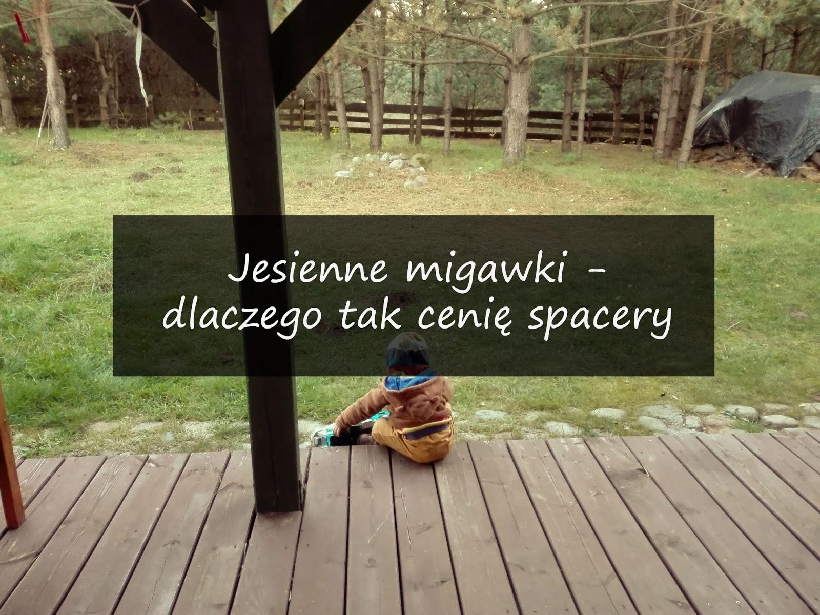 Jesienne migawki, spacery, Sprytny Lisek