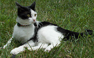 Some outdoor time is a great stress reliever and will help you avoid the top ten health issues in cats.