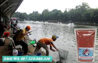 Umpan Ikan Mas Tombro Khusus Harian