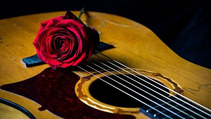 Rose & Guitar Wallpaper