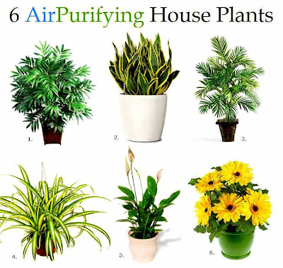 Natural Air Purifying Good For Nature
