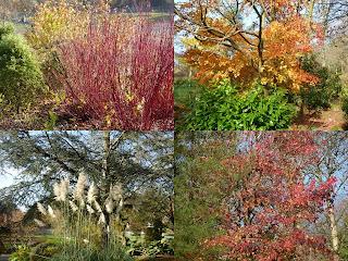 cwmdonkin park autumn colours
