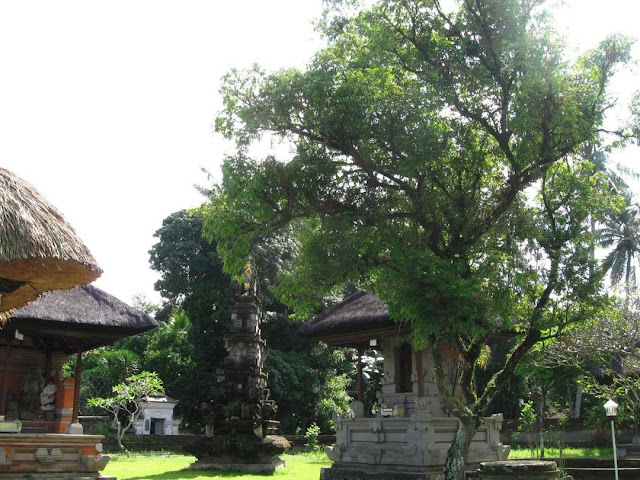 Ciri Ciri Pohon Nagasari