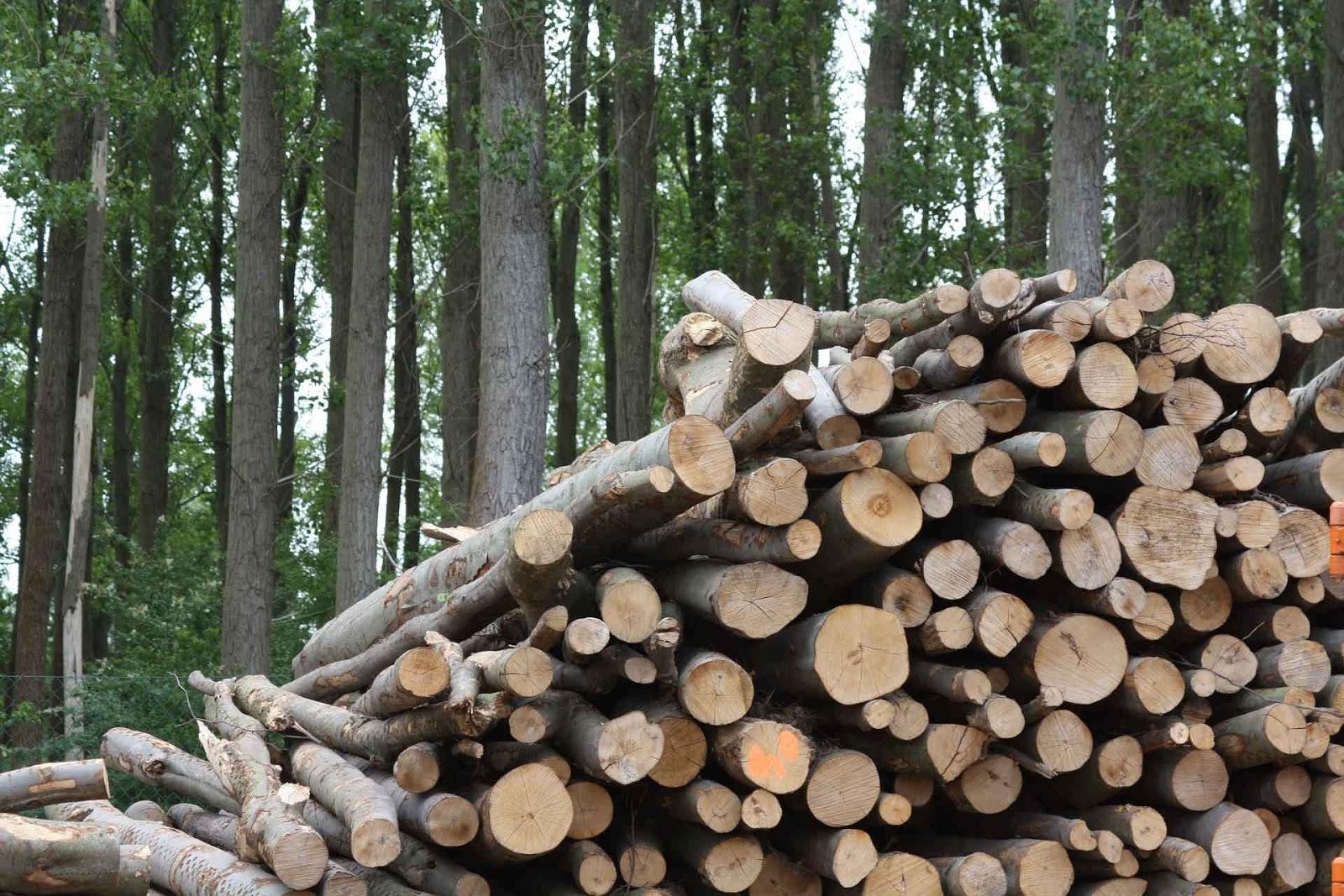 Biomass explanation
