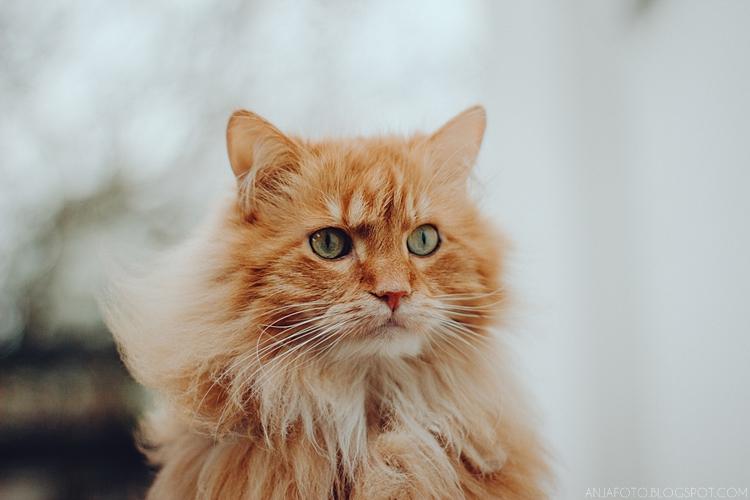 sesja fotograficzna kota, kocia sesja fotograficzna, fotograf łomianki