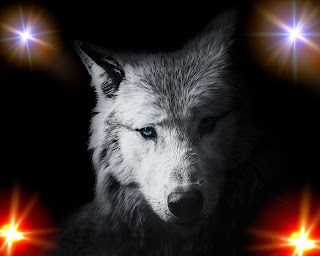 Wolf wallpaper for iphone - Wolf wallpaper for Desktop 2020 Free Download