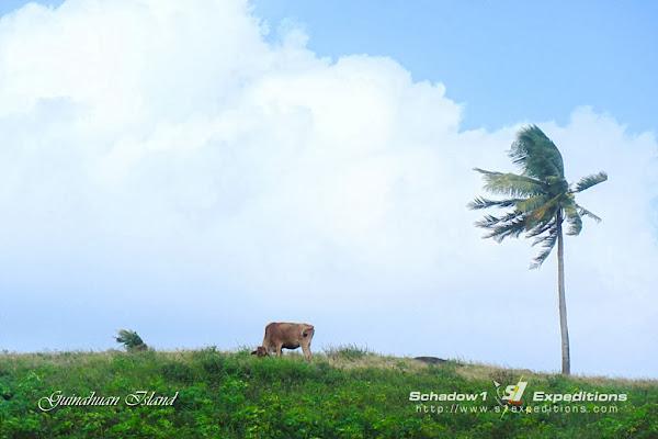 Grazeland of Guinahuan Island Caramoan - Schadow1 Expeditions