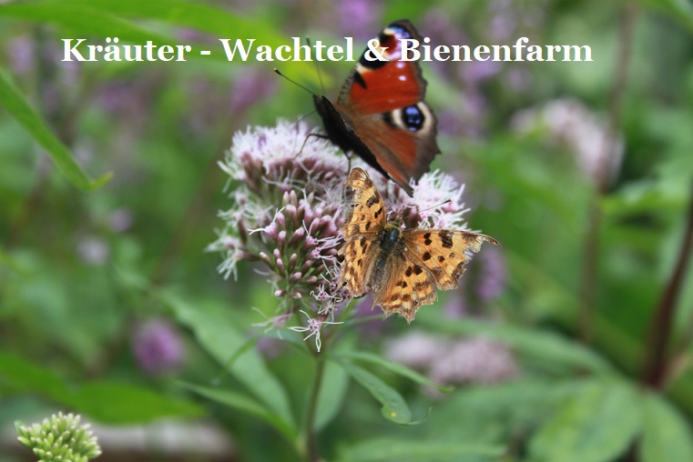 Kräuter - Wachtel & Bienenfarm