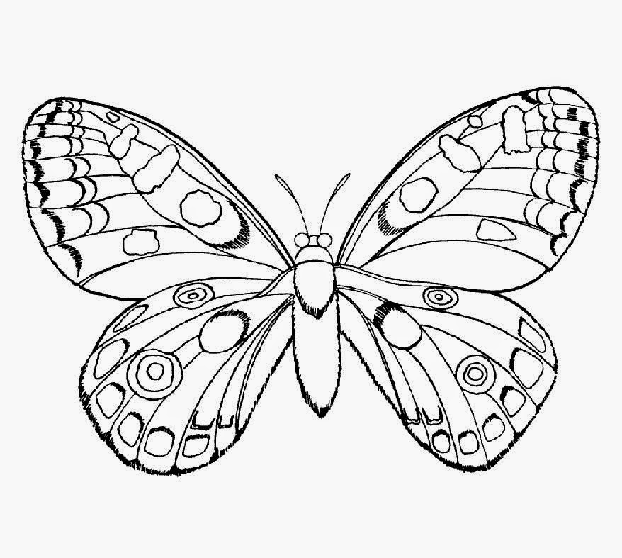 Insect Coloring Sheets Free Coloring