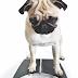 Παχυσαρκία και αρθρίτιδα: ανησυχητική αύξηση στους σκύλους