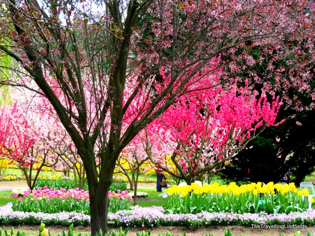 Blossom trees at Tulip Top Gardens