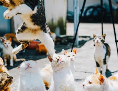 Organisasi Kucing