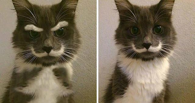 foto editan kucing