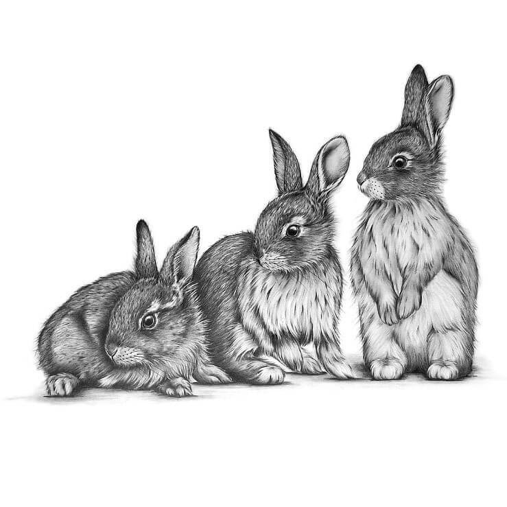 08-The-3-Bunnies-Kerry-Jane-Detailed-Black-and-White-Wildlife-Drawings-www-designstack-co