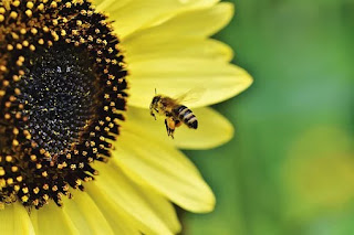 8 Ayat Al-Quran Tentang Entomologi