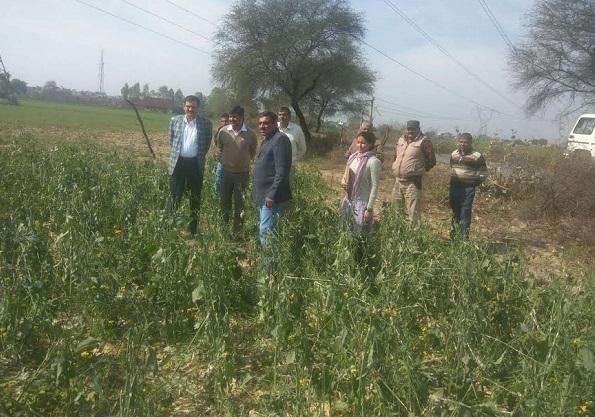 ओले के कारण बर्बाद हुई फसलों का अधिकारियों ने लिया जायजा