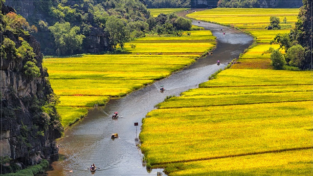 Surprised by the picturesque rice fields look like pictures in Tam Coc