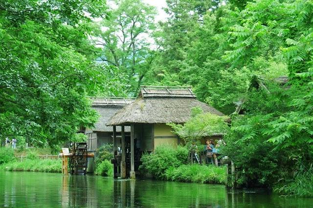 Visit  Daio Wasabi Farm - the land like a fairyland in Japan