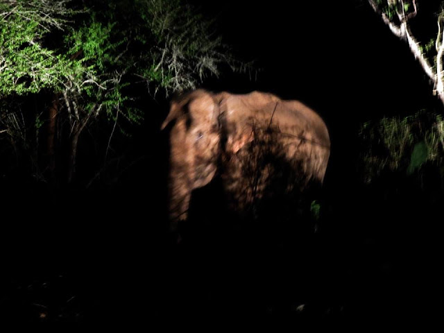 elephant at night masinagudi april 2017 safari by anuj hissaria