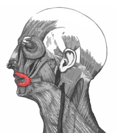 Imagen resaltad del músculo orbicular de la boca