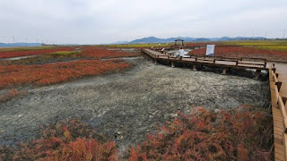 Tempat Wisata Korea Selatan Pertanian Garam Jeungdo