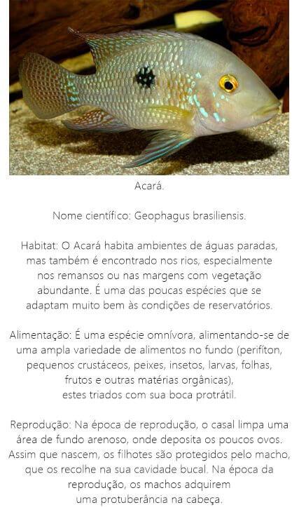 Peixe-Acara