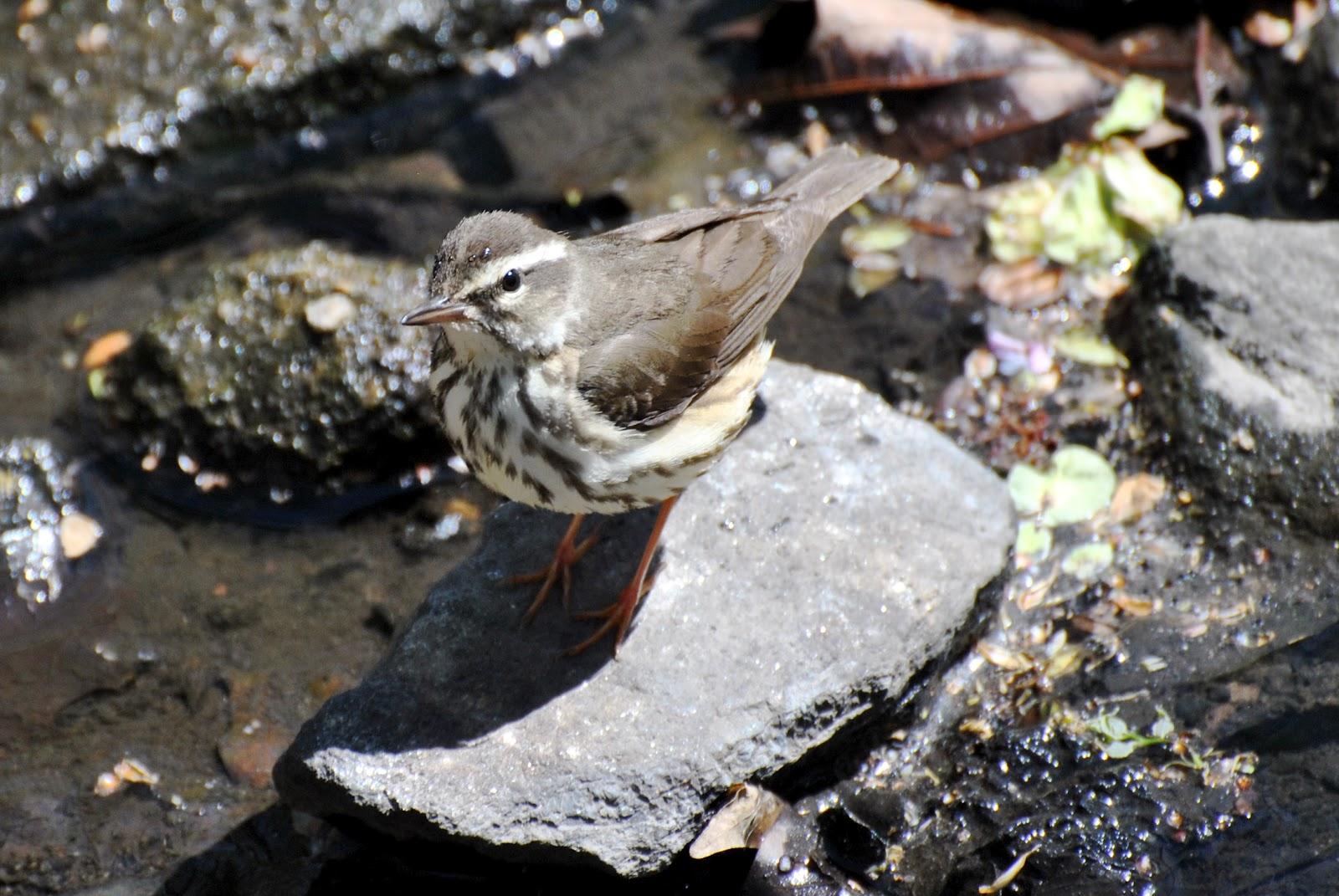 Urban Wildlife Guide: New York City Is Full Of Spring Birds