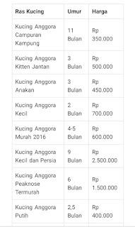 Daftar Harga Kucing Anggora