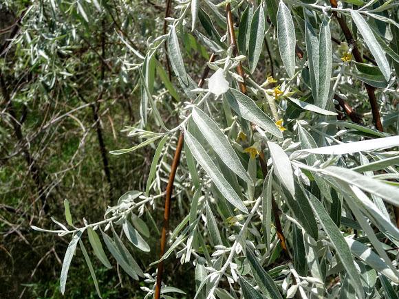 Арабатская стрелка. Аромат цветущих растений